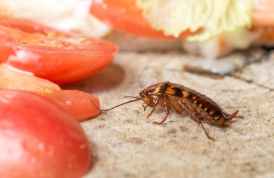 cockroach removal-melbourne