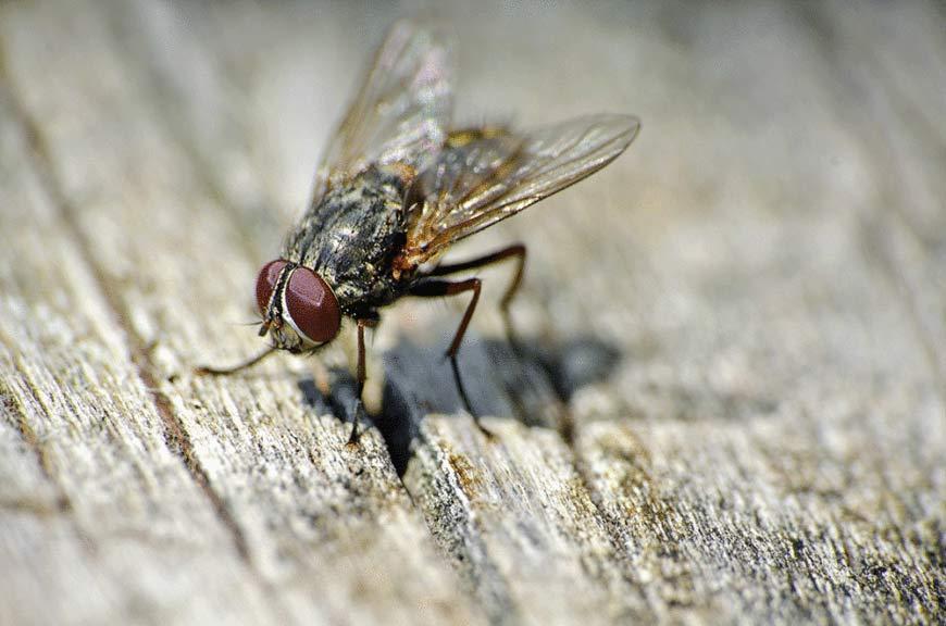 keeping flies away